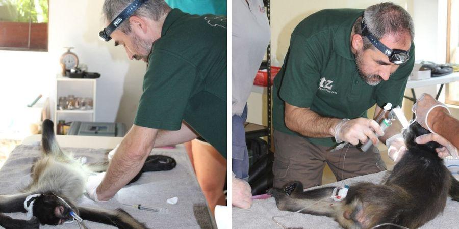 Twycross Zoo Conservation work