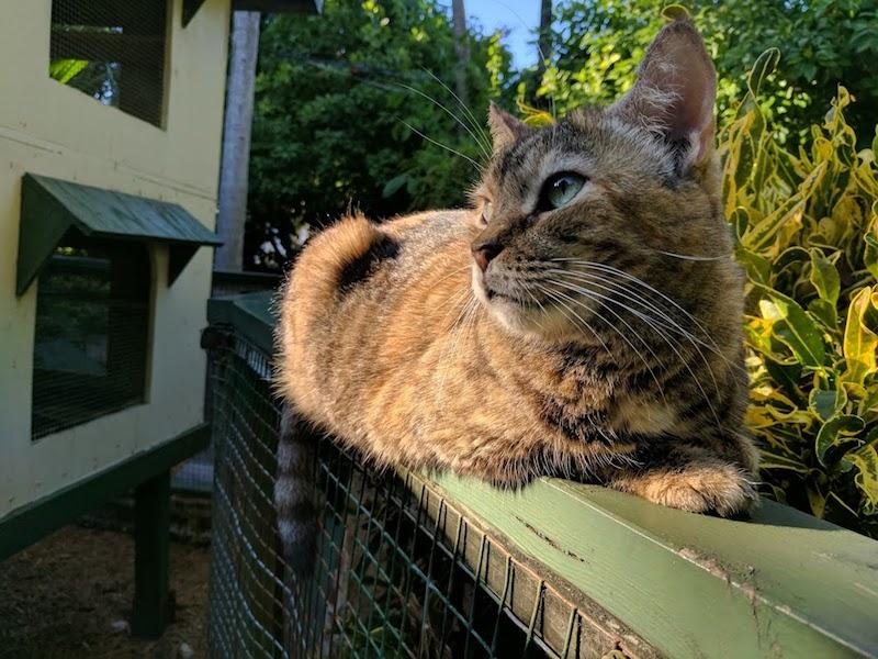 cat hemingway museum key west