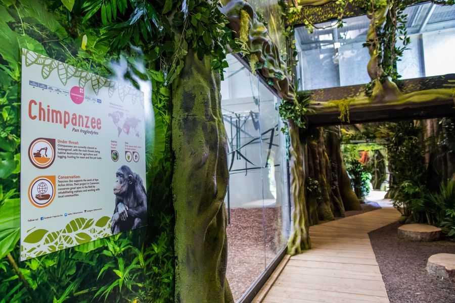 Twycross Zoo Chimpanzee Eden enclosure