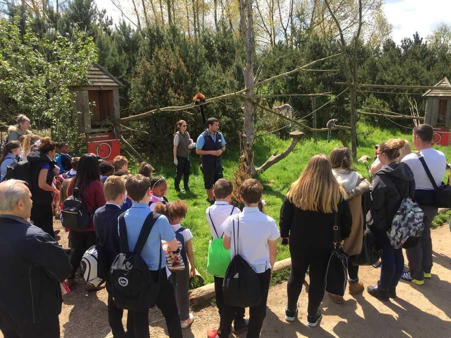 Twycross Zoo Lemur Walkthrough
