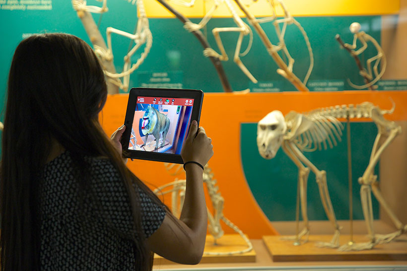 skin and bones smithsonian AR experience checklist