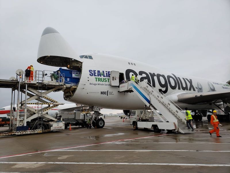 cargolux plane sea life trust beluga whale sanctuary