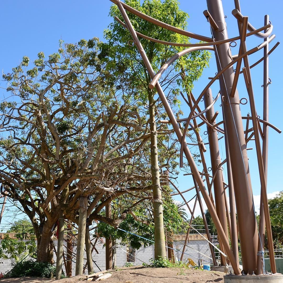 auckland zoo canopy