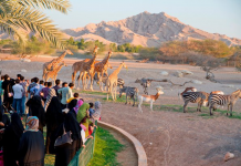 al ain zoo expansion