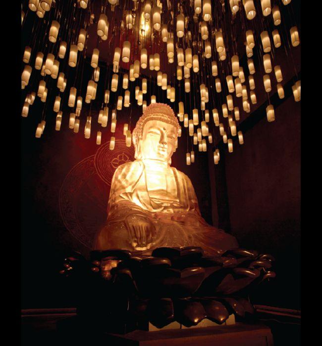 nFusion Companies of Nassal Buddha