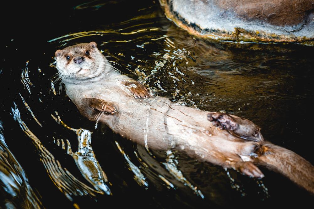 Otter Barcelona Zoo animalist