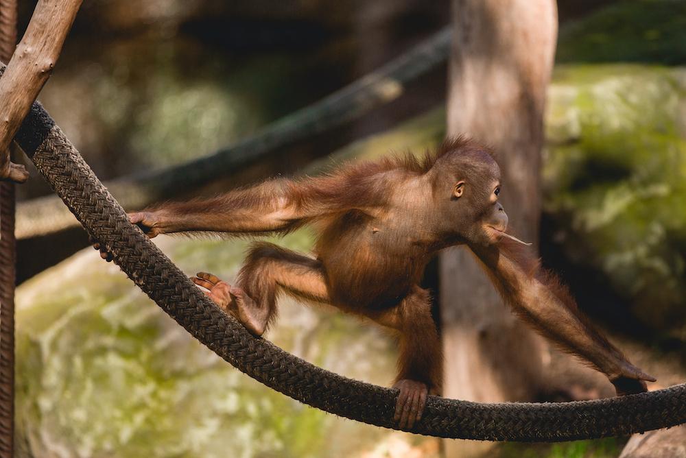 Barcelona Zoo animalist
