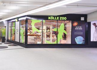 dan pearlman kolle zoo