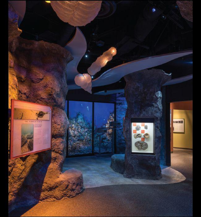 nassal Companies of Nassal rockwork in aquarium