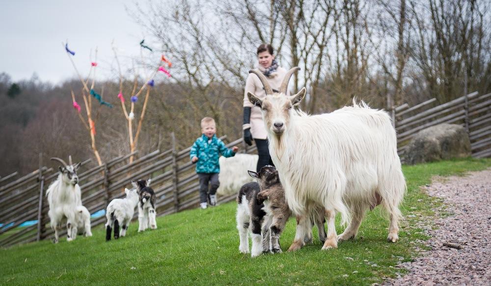 Lund Gruppen Skånes Djurpark easter baby boom