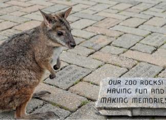 cincinnati zoo roo valley