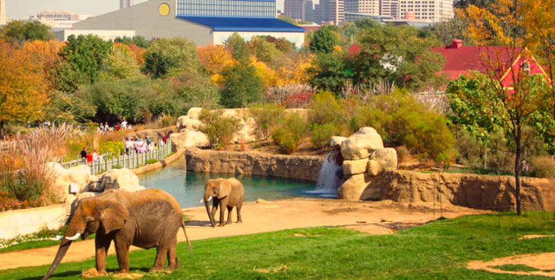 Christmas At The Zoo Indianapolis 2019.Indianapolis Zoo Announces Expansion For Elephants Blooloop