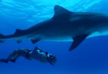Immotion Shark Dive
