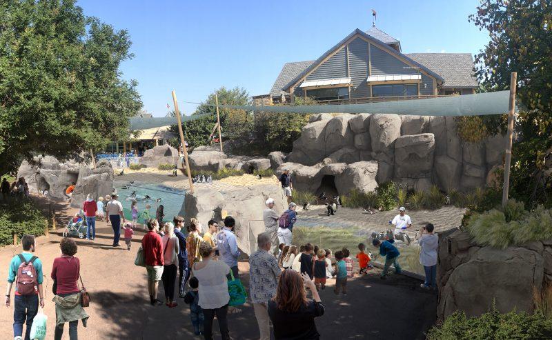 denver zoo penguin habitat