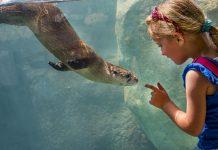 Milwaukee County Zoo otter passage