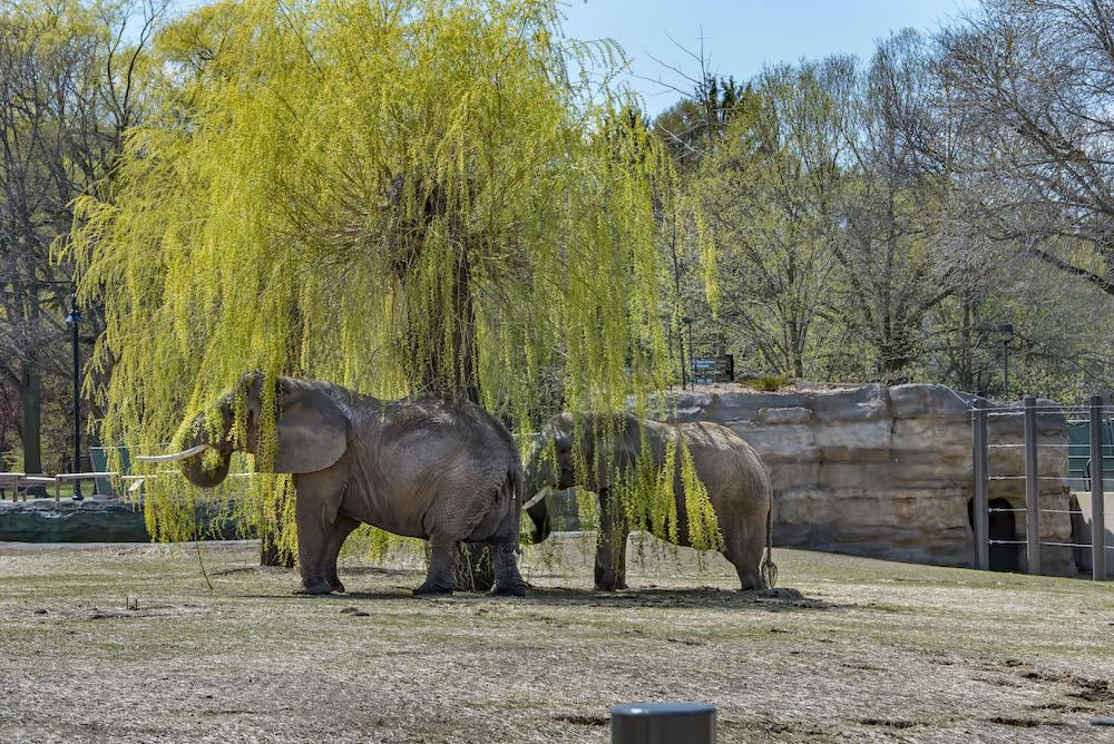 Elephants Milwaukee Zoo