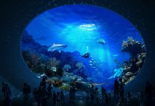Seattle council approves $34m for expansion of Seattle Aquarium