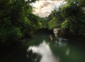 Green Canyon Elephants Flying Over Indonesia