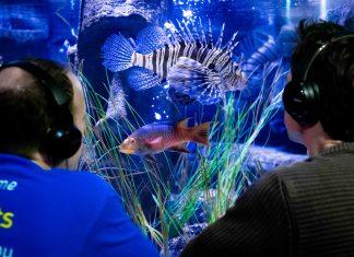 sea life london aquarium fish recording