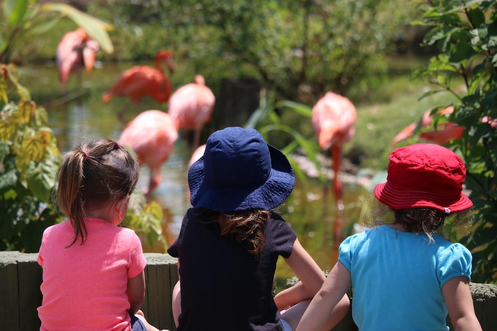 Toronto Zoo Dolf DeJong