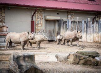 cleveland zoo rhino reserve