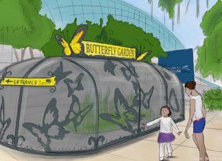 artist impression of florida aquarium projects - butterfly garden