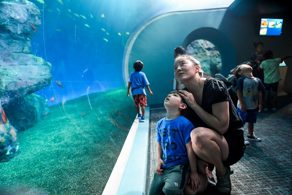 mother son looking at sharks point defiance zoo and aquarium Roto